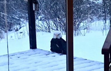 Eagle perched in the snow